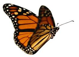 Butterflies and Stock Trading